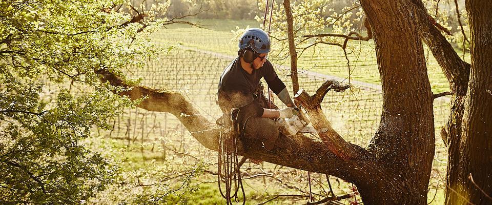 Wycinka ipielęgnacja drzew metodą alpinistyczną